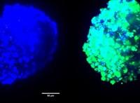 Nanorészecskékkel támadtak az agytumorra spanyol tudósok, és úgy néz ki, hogy eredményesen