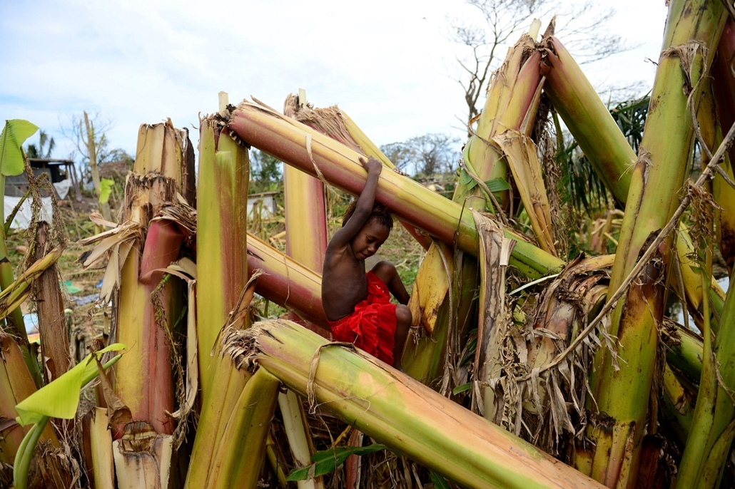 afp. hét képei - Mele, Vanuatui 2015.03.19. A young boy plays amongst a destroyed banana plantation in Mele, outside the Vanuatu capital of Port Vila on March 19, 2015, after Cyclone Pam ripped through the island nation. Vanuatu has hit out at aid groups