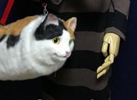 Itt a teljesen macskaszerű hátizsák