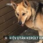 Négy év után találták meg egy budapesti család kutyáját