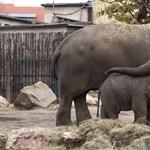 Cuki videóval hangol anyák napjára a fővárosi állatkert