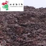 Gyomorforgató videót tettek közzé egy baranyai állatfeldolgozó telepről