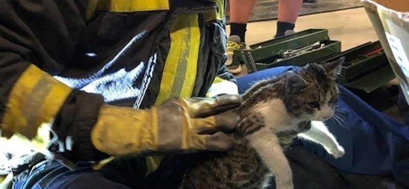 Autó motorteréből mentettek macskát a tűzoltók