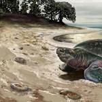 Elpusztult a texasi hidegben megdermedt teknősök kétharmada