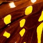 Pillangókat kapott lencsevégre a divatfotós