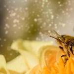 Élve kidobtak a kukába egy teljes méhrajt