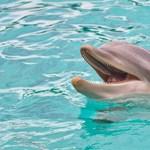 Igen kedves dolog derült ki a delfinekről: sosem hagyják el a nevüket