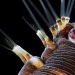 Idegsejtek és megtört fény a legjobb mikrofotók között – Nagyítás-fotógaléria