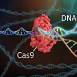 Megváltoztatja az életünket a genetikai olló – csak nem mindegy, hol vágunk vele