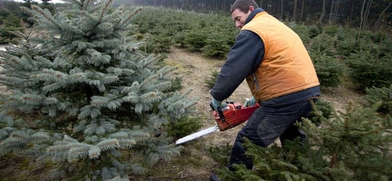 Van valami, ami nagyon kell karácsonyra, de nem lesz drágább, mint tavaly