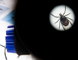 Újabb vírus ütötte fel a fejét Kínában, heten meghaltak miatta