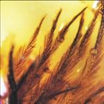 A tudósok találtak egy 99 millió éves borostyánt, igazi ritkaságot őriz a belseje