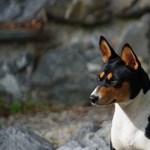 Feltérképezték egy ősi kutyafajta genomját, segíthet megérteni a kutyák fejlődését