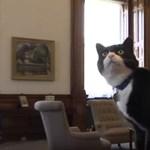 Elmérgesedett a helyzet a Downing Streeten, egyre durvább a cicaharc a brit egerészek között