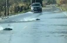 Videó: Akkora árvíz volt egy főúton, hogy felúsztak rajta a lazacok