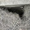 """Újabb """"migáns-alagutat"""" találtak a rendőrök"""