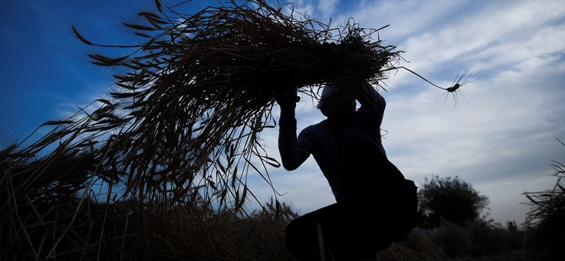 A járvány után minden megváltozhat az élelmiszeriparban is