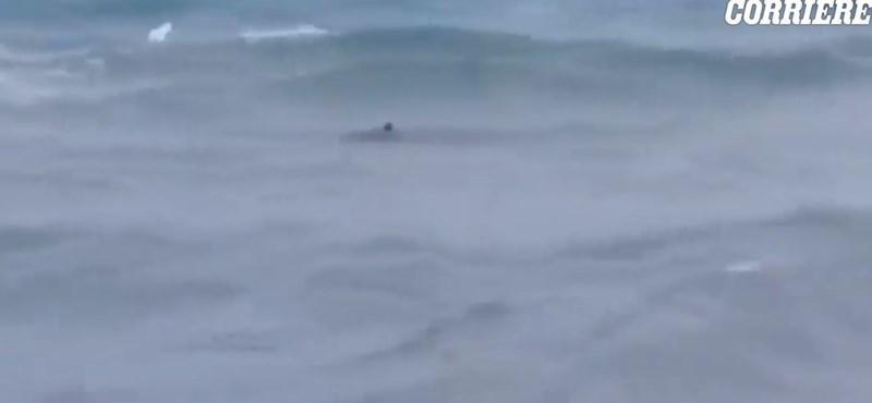 A strandolóktól pár méterre úszkált egy jókora cápa Dél-Olaszországban – videó