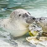 Borjúfóka született a Nyíregyházi Állatparkban - fotókkal