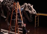 2 milliárd forintért kelhet el a világ egyik legnagyobb és legteljesebb T-rex-csontváza