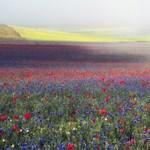 Ilyen lehetett a világ első virágja
