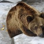 Mackófesztivál lesz az Állatkertben