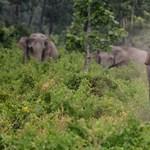 Meghalt Daphne Sheldrick, az elefántok anyja