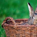 Mit csináljunk a hétvégén? - húsvéti programok