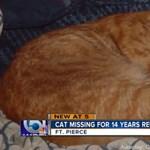 Visszatért 14 év után T2, a halottnak hitt macska