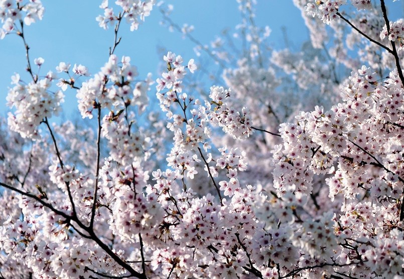 Mikor lesz a 2020-as tavaszi szünet? Itt vannak a dátumok