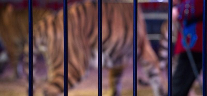 Harminc rendőr üldözött egy oroszlánt Essexben