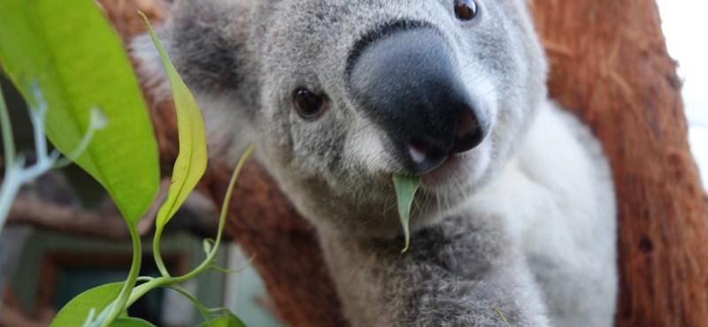 Szenzációs hír érkezett a Fővárosi Állatkertből