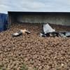 Szokatlan baleset Csehországban: Egy rakomány cukorrépa temetet be egy autót