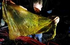 Undorító dolgot találtak egy halott bálna gyomrában