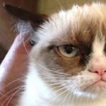 Meghalt Grumpy Cat