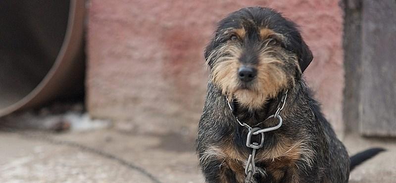Letöltendő börtönt kapott állatkínzásért egy mázai kutyatartó