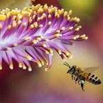 Bebizonyították a tudósok: a méhek is képesek összeadni és kivonni