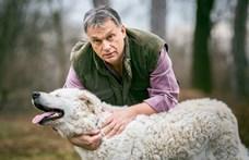 65 millió forintot szán a Nébih arra, hogy kiderüljön, melyik kutya magyar valóban