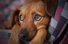 Nem lesz egyszerű kutyát sétáltatni a Belvárosban