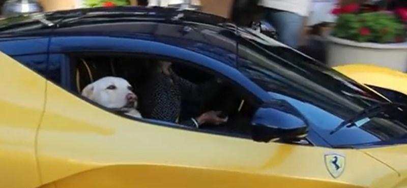 Az hagyján, hogy ez a kutyus LaFerrariban utazgat, de nem is akárkiében