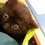 A tömörítőt és a futószalagot is túlélte a szemétbe esett pécsi cica – fotó