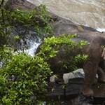 Egymást próbálták megmenteni, végül mind a hat elefánt odaveszett egy vízesésben