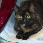 Hihetetlen távolságból került elő egy Hollandiából elkóborolt cica