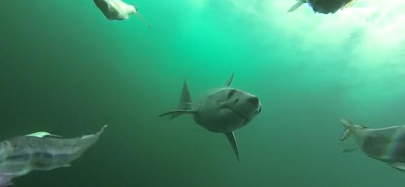 Nem, az Irma hurrikán nem kapott fel cápákat az óceánból