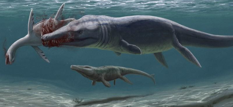 Se han omitido los hallazgos antiguos conservados durante 109 años: los cocodrilos de 7 metros todavía están vivos a 400 kilómetros de Budapest.