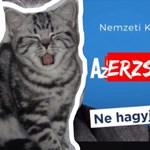 Megtudtuk, kire fog szavazni Erzsi, az ország leghíresebb macskája