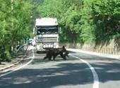 Rájár a rúd a medvékre Romániában
