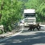 Tusnádfürdő polgármestere szerint álhír volt a medvetámadás
