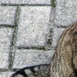 Mit tegyek, ha kóbor macska pisilt az ágyra? Az év meghökkentő kérdéseit rangsorolta a brit külügy