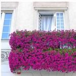 Hogyan varázsoljuk erkélyünket hangulatos virágtengerré?